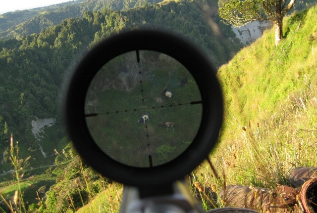 Sightron At 700 Yards For Web