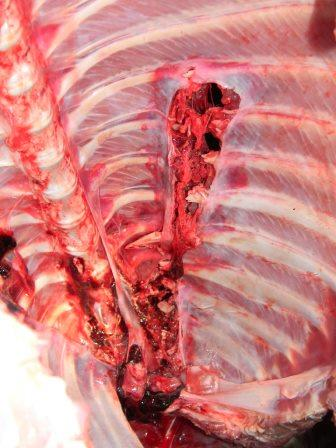 internal rib damage