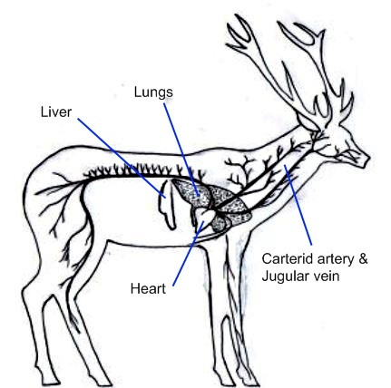 Deer vitals for website.jpg